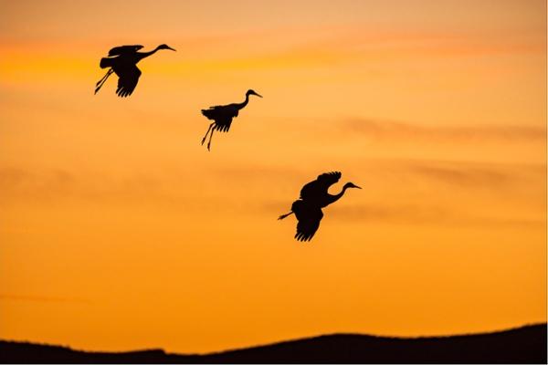 MikeInce_BirdPhotographer.jpg